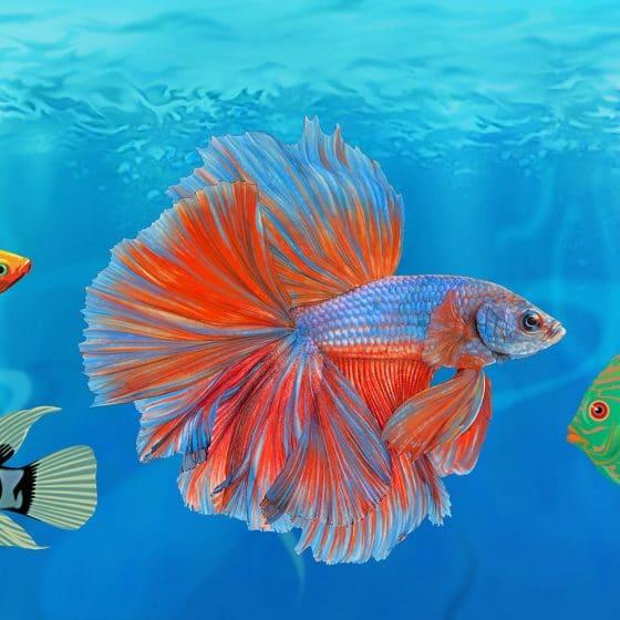 illustratie t.b.v. Fishfood-(verpakking) voor aquariumvissen i.o.v. theprofs.nl